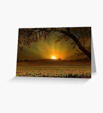 Sunrise in Vineyard Greeting Card