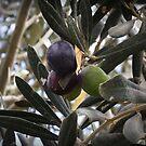 Olive by rasim1