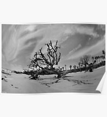 Hunting Island Beach And Driftwood Black And White Poster