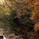 RIVER TEIGN IN NOVEMBER by Michael Carter