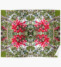 Holly Berry Photo Fractal 803 Poster