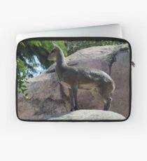 African Kilpspringer San Diego Zoo Laptop Sleeve