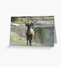 Oh Deer. Jasper National Park Greeting Card