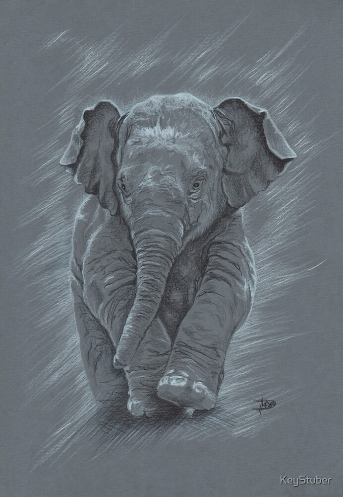 Young elephant by KeyStuber