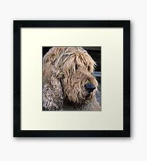 ..an otterhound.. Framed Print