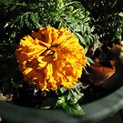 Sunlit Orange Marigold and Autumn Leaves by BlueMoonRose