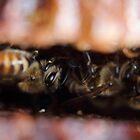 Upside Down Honeybees by Laura Puglia