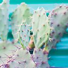 cactus close up by sleepwalker