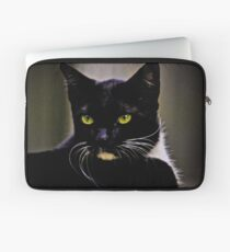 Mr Macdonald part II: On Featured: Cats-and-dogs Group Laptop Sleeve