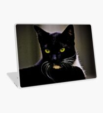 Mr Macdonald part II: On Featured: Cats-and-dogs Group Laptop Skin