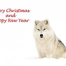 Christmas Arctic wolf by Jim Cumming