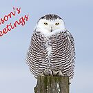 Christmas Snowy owl by Jim Cumming