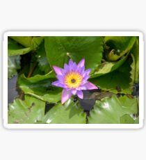 Nymphaea. Plant flower close up Sticker