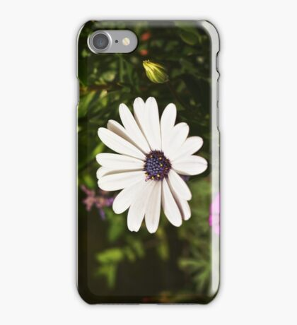 African Daisy 2 iPhone Case/Skin