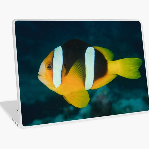 Clark's Anemonefish - Amphiprion clarkii Laptop Skin