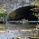 Culvert with Heron by Kenneth Hoffman