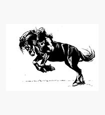 Friesian Stallion in Ink Photographic Print