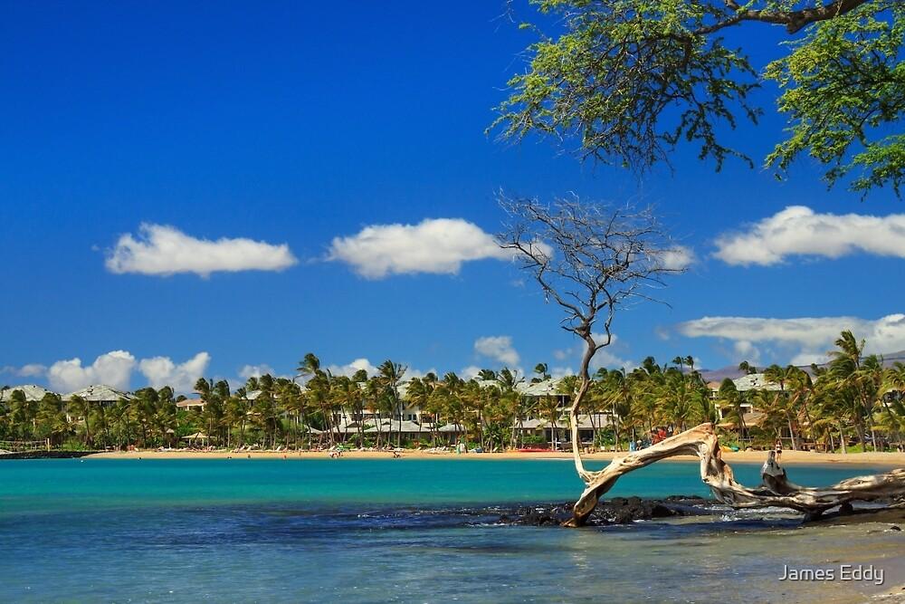 Anaehoomalu Bay by James Eddy