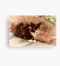 Calico Kitten Canvas Print
