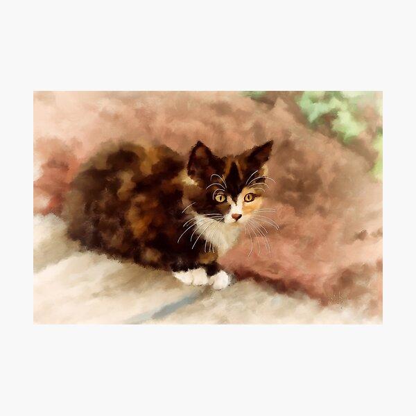 Calico Kitten Photographic Print