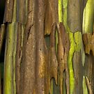 Green Bark 2 by Werner Padarin