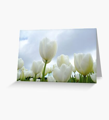Field of White Greeting Card