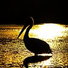 Pelican on Narrabeen Lake at sunset by Doug Cliff
