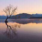 Lonely Tree at Lake Wanaka New Zealand by anupamhatui