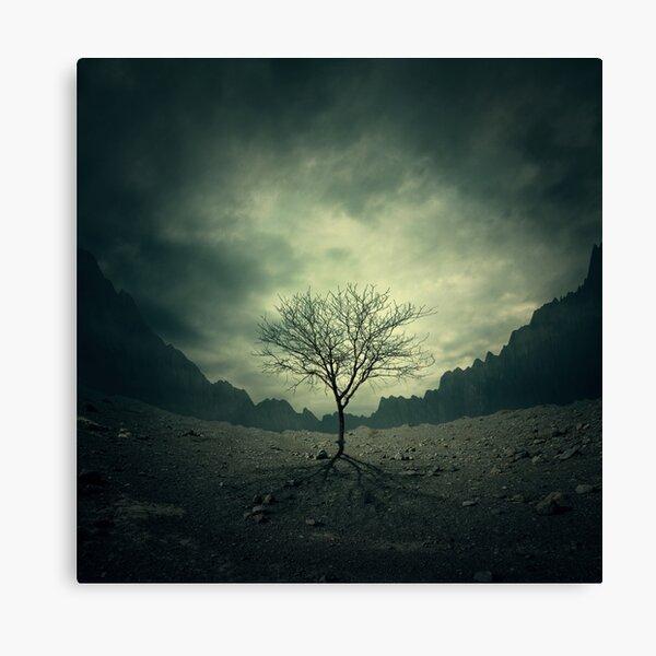 Tree Shadow Canvas Print
