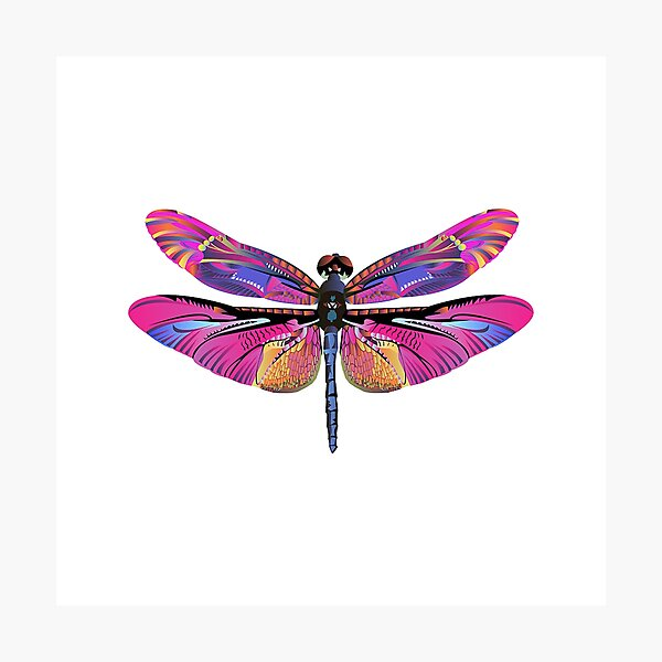 Pink Purple Dragonfly Photographic Print