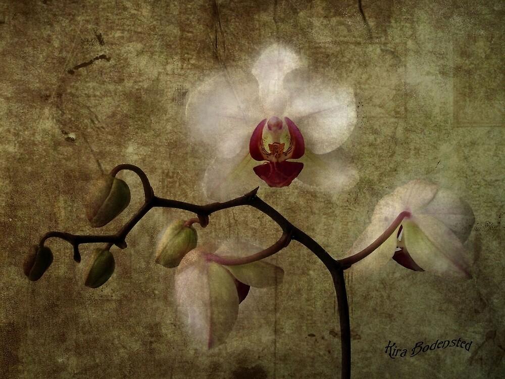 Vintage by © Kira Bodensted