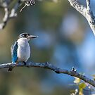 Forest kingfisher by Janette Rodgers