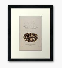 Tortoises terrapins and turtles drawn from life by James de Carle Sowerby and Edward Lear 009 Framed Print