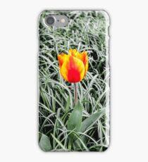 Dutch Tulips part 10 iPhone Case/Skin
