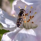 """""""A"""" for apple; """"B"""" for bee by indiafrank"""