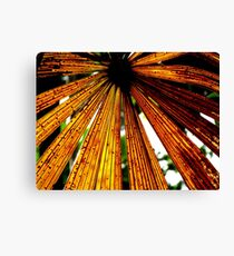 Rusty Colours of a Licuala Fan Palm Canvas Print