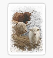 Highland Cow Family in Snow Sticker