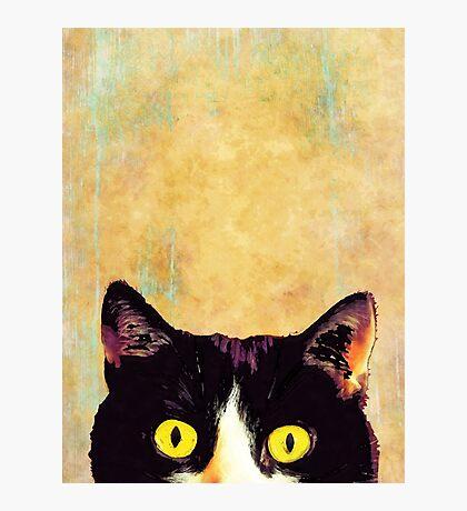 hidden cat 1 Photographic Print