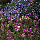 Flowers of Fort Tryon Park by steeber