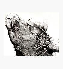 Highland Bull Photographic Print