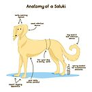 Anatomy of a Saluki by Jezhawk