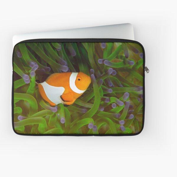 False Clown Anemonefish - Amphiprion ocellaris Laptop Sleeve