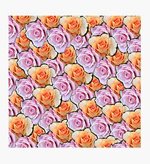 orange and pink roses Photographic Print