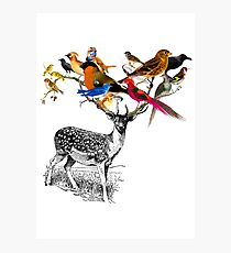 DEER BIRDY Photographic Print
