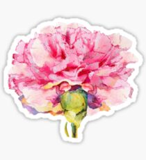 Carnation : The January Flower Sticker