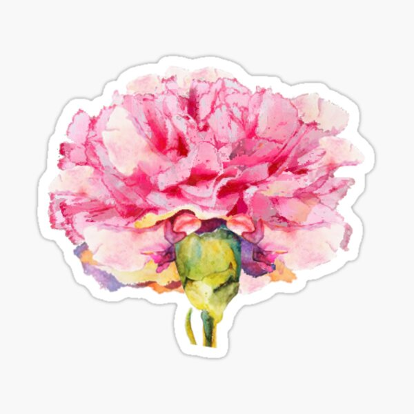 Carnation : The January Flower Sticker