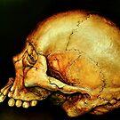 old orange skull by Dvf1973