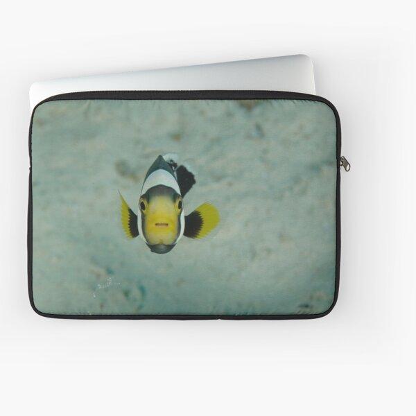 Juvenile saddleback anemonefish - Amphiprion polymnus Laptop Sleeve
