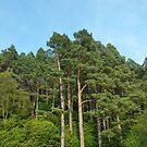 Woodland Treetops by Richard Winskill
