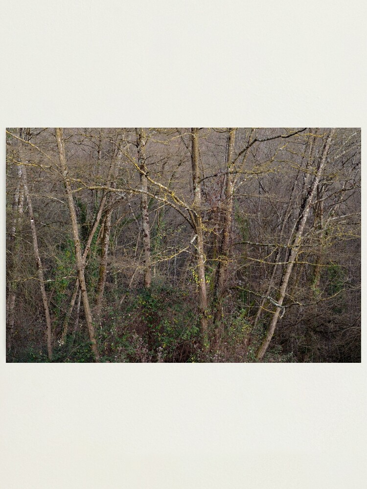 Alternate view of Grove in dusk light Photographic Print